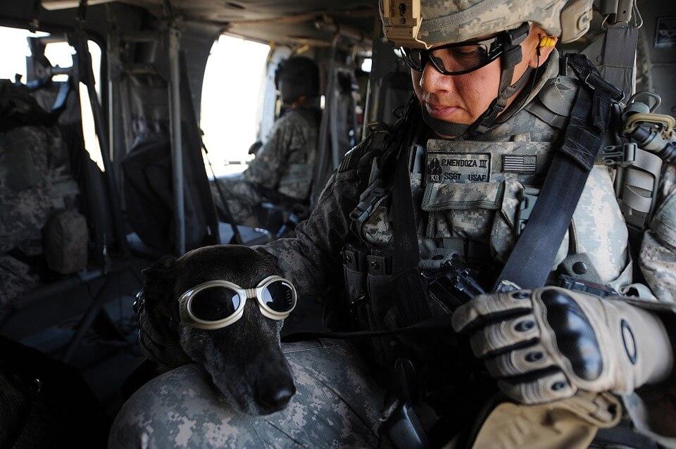 även skyddsglasögon för hunden